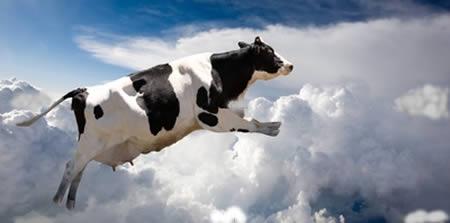 a97047_8-Cow2